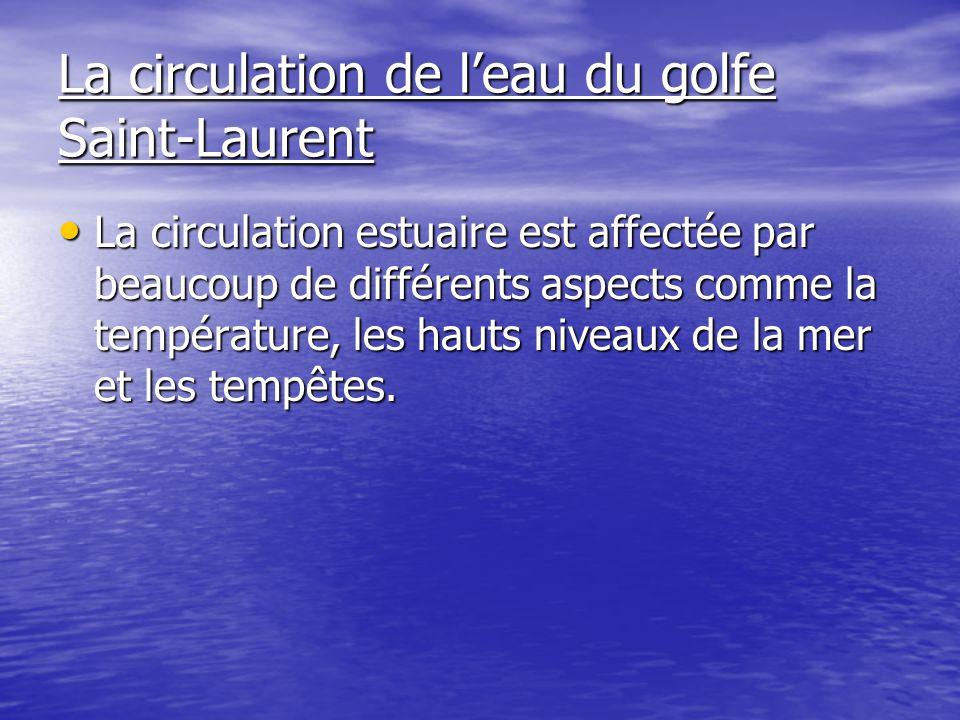 La circulation de leau du golfe Saint-Laurent La circulation estuaire est affectée par beaucoup de différents aspects comme la température, les hauts