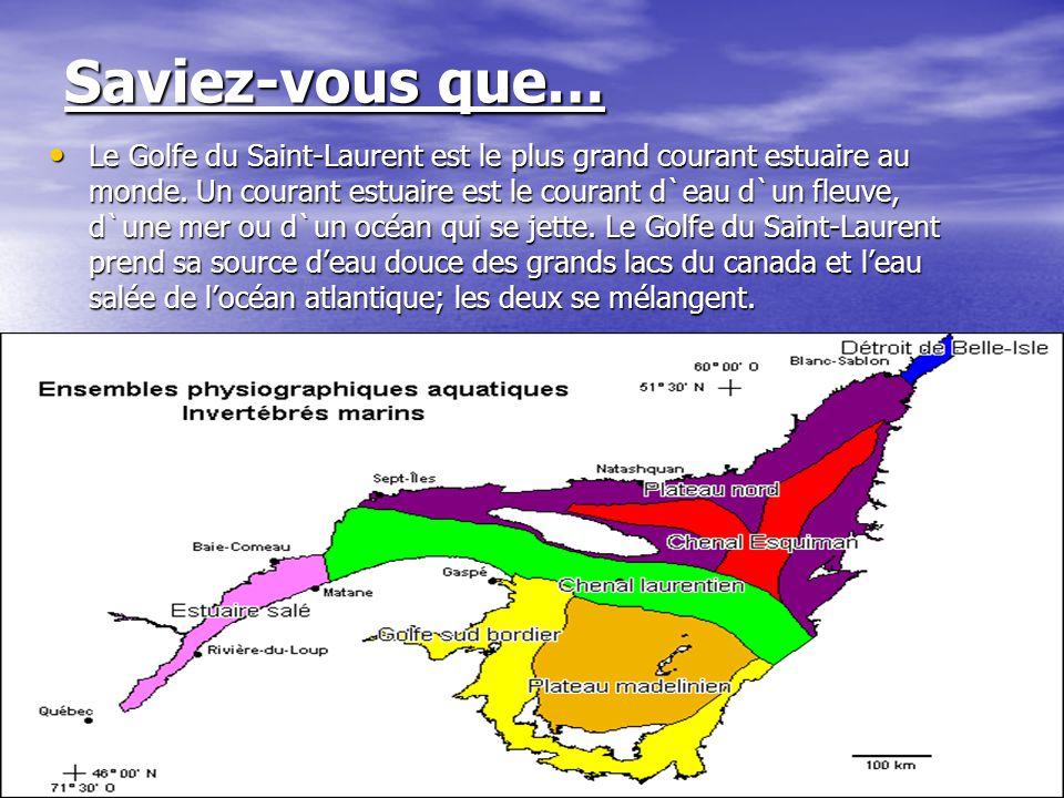 Saviez-vous que… Le Golfe du Saint-Laurent est le plus grand courant estuaire au monde. Un courant estuaire est le courant d`eau d`un fleuve, d`une me
