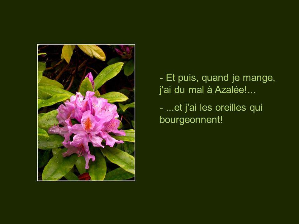 - Je suis amoureuse de Fanfan la Tulipe et ça me donne des végétations...