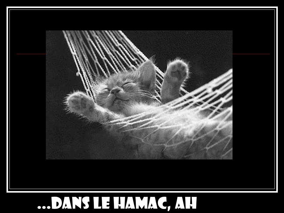 ...dans le hamac, ah ouais...!
