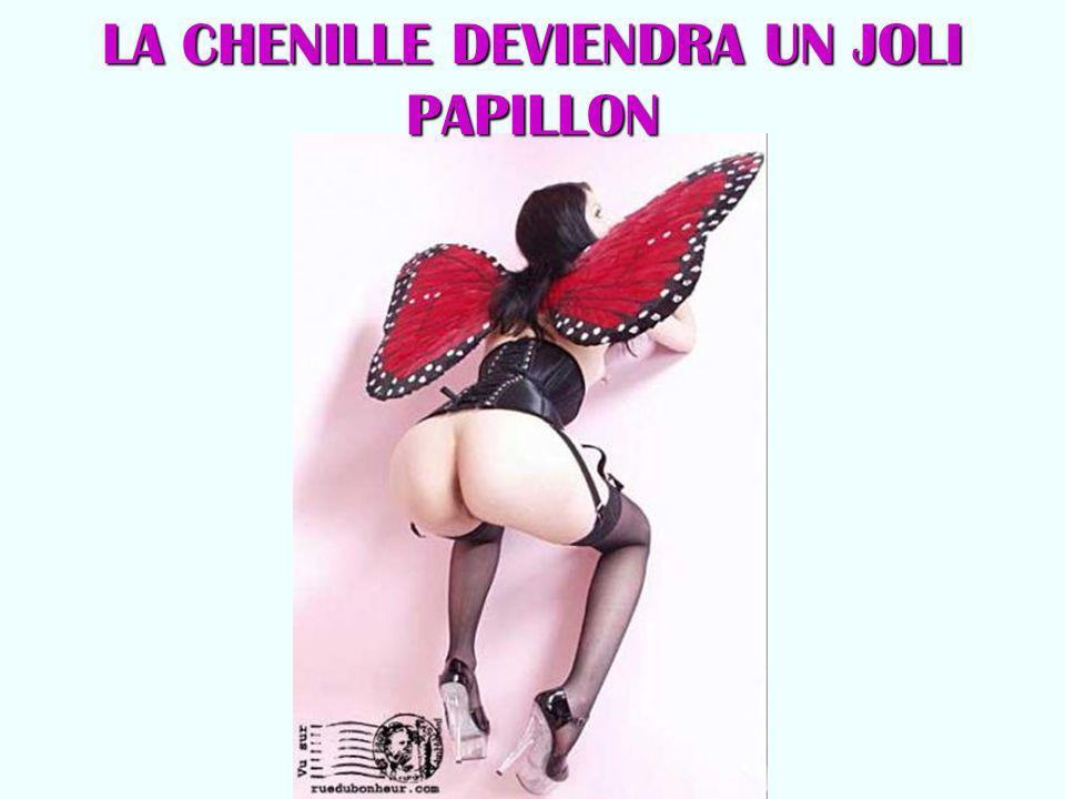 LA CHENILLE DEVIENDRA UN JOLI PAPILLON
