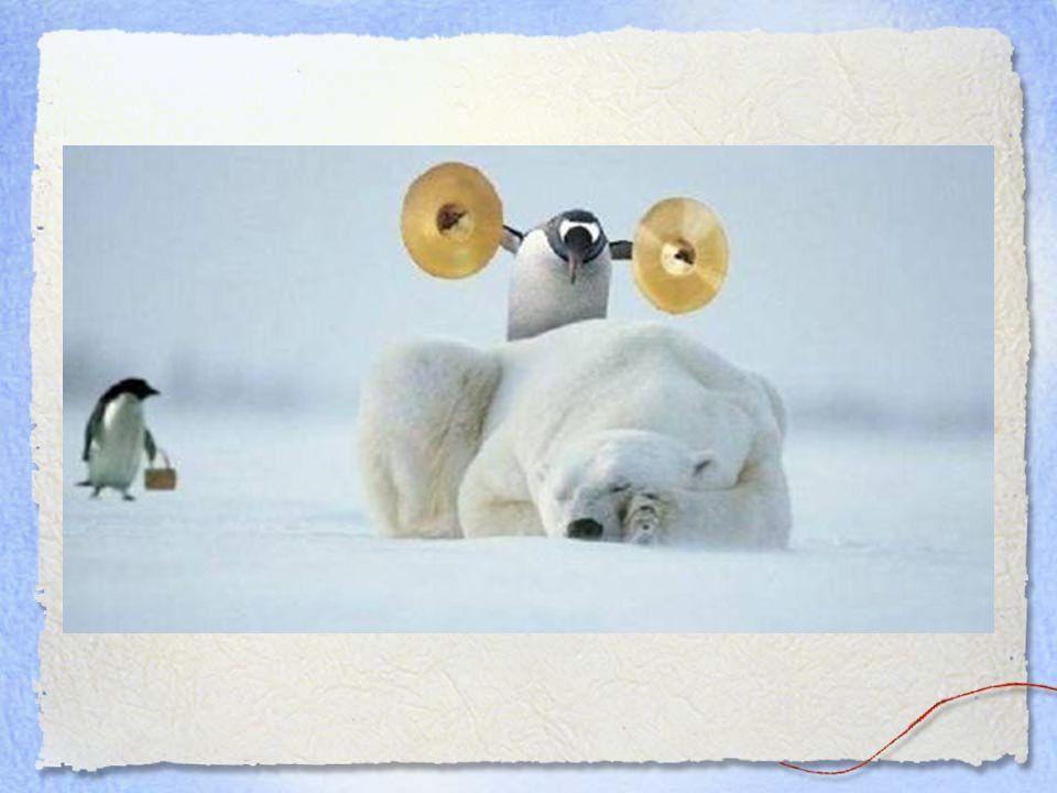 Beaucoup de bonheur... Puisses-tu toujours avoir de l'amour à partager, une bonne santé, et des amis attentionnés. Mais attention aux pingouins sourno