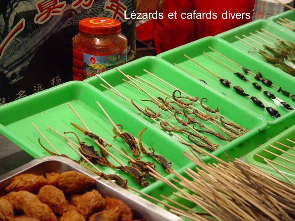 Huîtres, calmars et épaules d iguanes