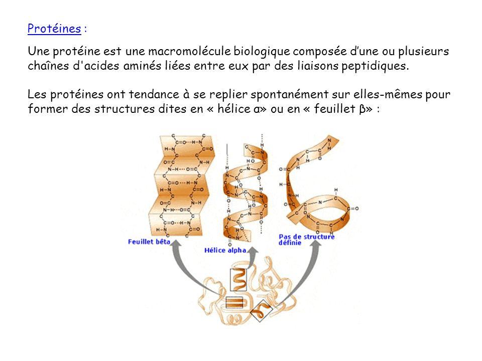 Protéines : Une protéine est une macromolécule biologique composée dune ou plusieurs chaînes d'acides aminés liées entre eux par des liaisons peptidiq
