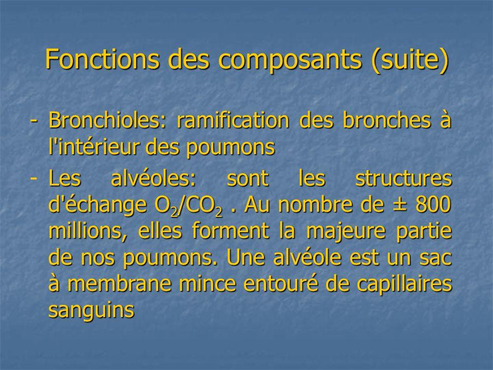 Fonctions des composants (suite) -Bronchioles: ramification des bronches à l intérieur des poumons Les alvéoles: sont les structures d échange O 2 /CO 2.