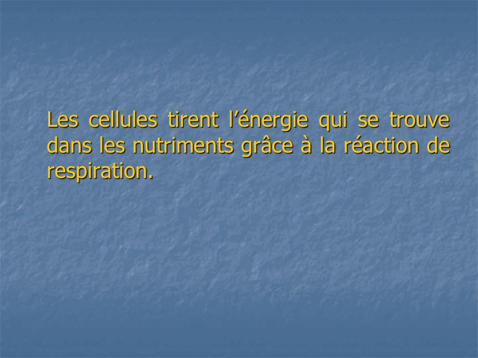 Les cellules tirent lénergie qui se trouve dans les nutriments grâce à la réaction de respiration.