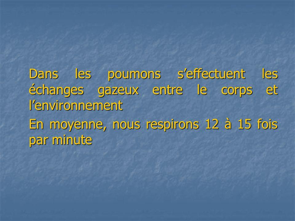Dans les poumons seffectuent les échanges gazeux entre le corps et lenvironnement En moyenne, nous respirons 12 à 15 fois par minute