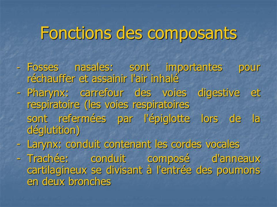 Fonctions des composants - Fosses nasales: sont importantes pour réchauffer et assainir l air inhalé - Pharynx: carrefour des voies digestive et respiratoire (les voies respiratoires sont refermées par l épiglotte lors de la déglutition) -Larynx: conduit contenant les cordes vocales - Trachée: conduit composé d anneaux cartilagineux se divisant à l entrée des poumons en deux bronches