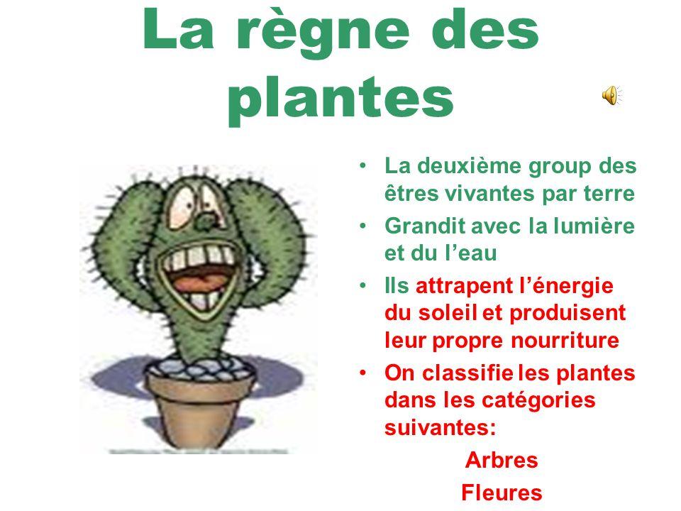 La règne des champignons On les trouve dans la terre Ne sont pas vertes Ne produisent pas leur propre nourriture Ils performent la répartition (breakd
