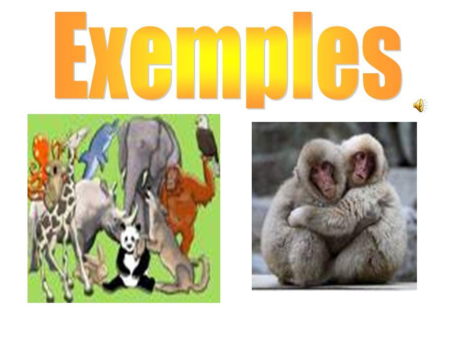 La règne animal Le plus grand groupe des être vivantes par terre Ont beaucoup des cellules Ne peuvent pas produire leur propre nourriture Plus que 1 m