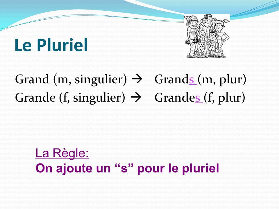 Le Pluriel Grand (m, singulier) Grands (m, plur) Grande (f, singulier) Grandes (f, plur) La Règle: On ajoute un s pour le pluriel