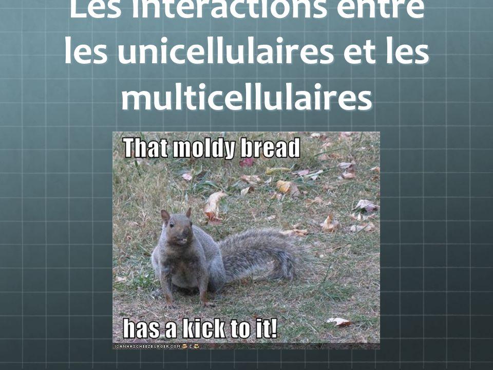 Les interactions entre les unicellulaires et les multicellulaires
