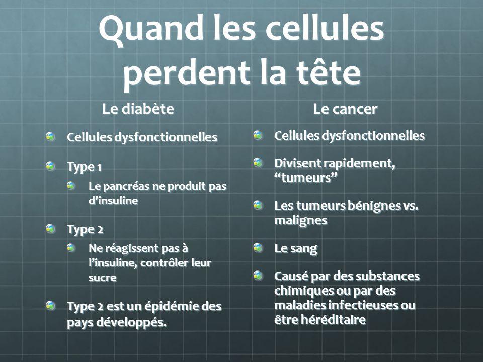 Quand les cellules perdent la tête Le diabète Cellules dysfonctionnelles Type 1 Le pancréas ne produit pas dinsuline Type 2 Ne réagissent pas à linsuline, contrôler leur sucre Type 2 est un épidémie des pays développés.