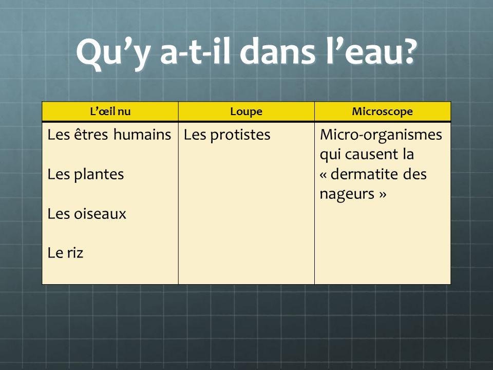 6.4 – Les organismes multicellulaires Possèdent plus de composantes actives (les cellules) que les organismes unicellulaires.