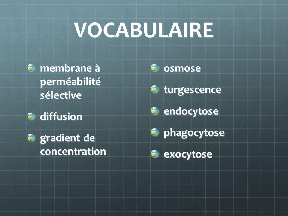 VOCABULAIRE membrane à perméabilité sélective diffusion gradient de concentration osmose turgescence endocytose phagocytose exocytose