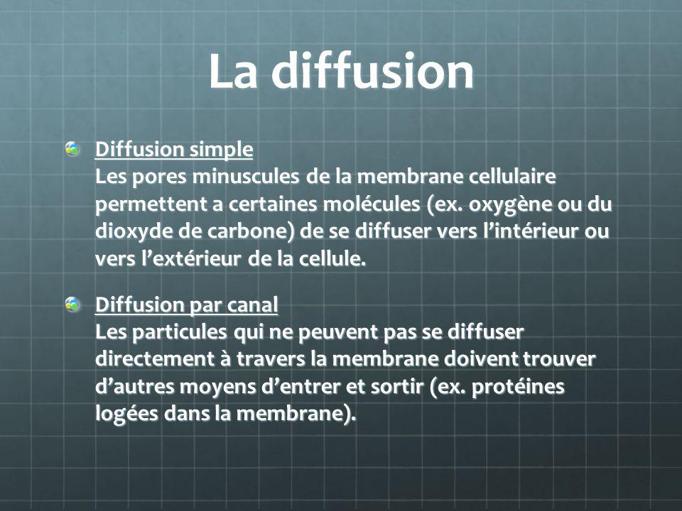 La diffusion Diffusion simple Les pores minuscules de la membrane cellulaire permettent a certaines molécules (ex. oxygène ou du dioxyde de carbone) d