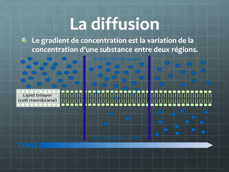 La diffusion Le gradient de concentration est la variation de la concentration dune substance entre deux régions.