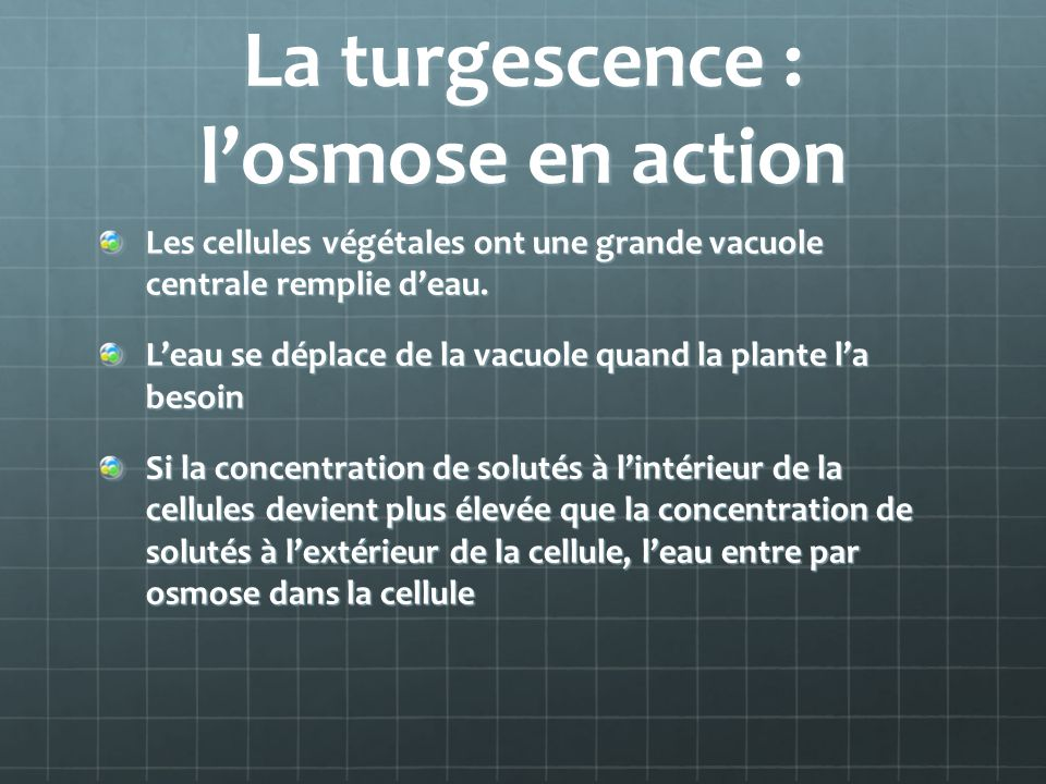La turgescence : losmose en action Les cellules végétales ont une grande vacuole centrale remplie deau. Leau se déplace de la vacuole quand la plante