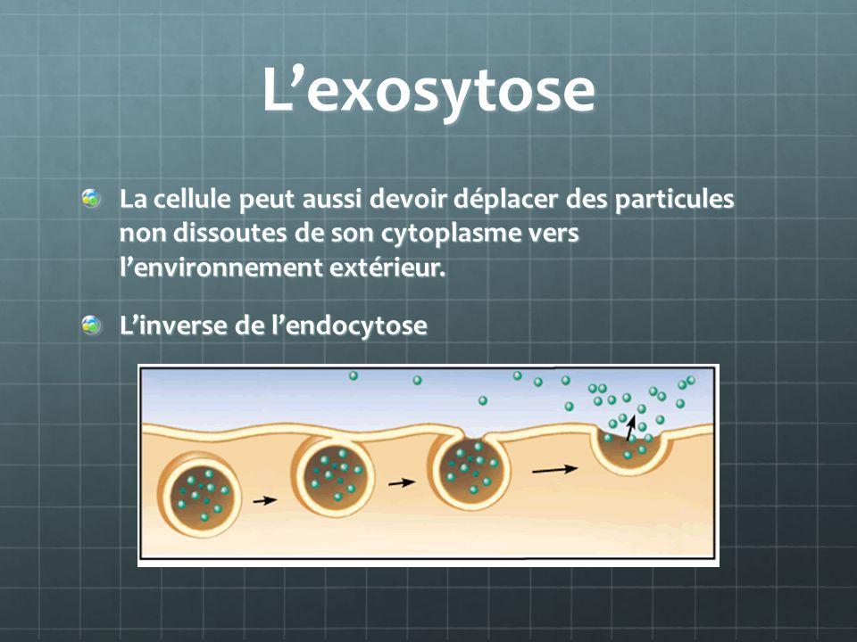 Lexosytose La cellule peut aussi devoir déplacer des particules non dissoutes de son cytoplasme vers lenvironnement extérieur. La cellule peut aussi d