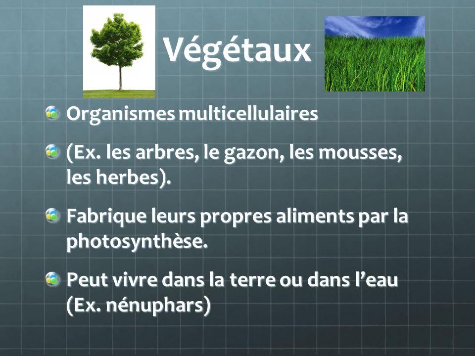 Végétaux Organismes multicellulaires (Ex. les arbres, le gazon, les mousses, les herbes). Fabrique leurs propres aliments par la photosynthèse. Peut v