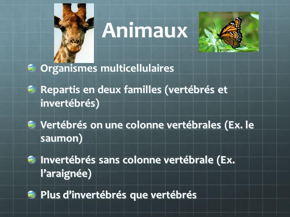 Animaux Organismes multicellulaires Repartis en deux familles (vertébrés et invertébrés) Vertébrés on une colonne vertébrales (Ex. le saumon) Invertéb