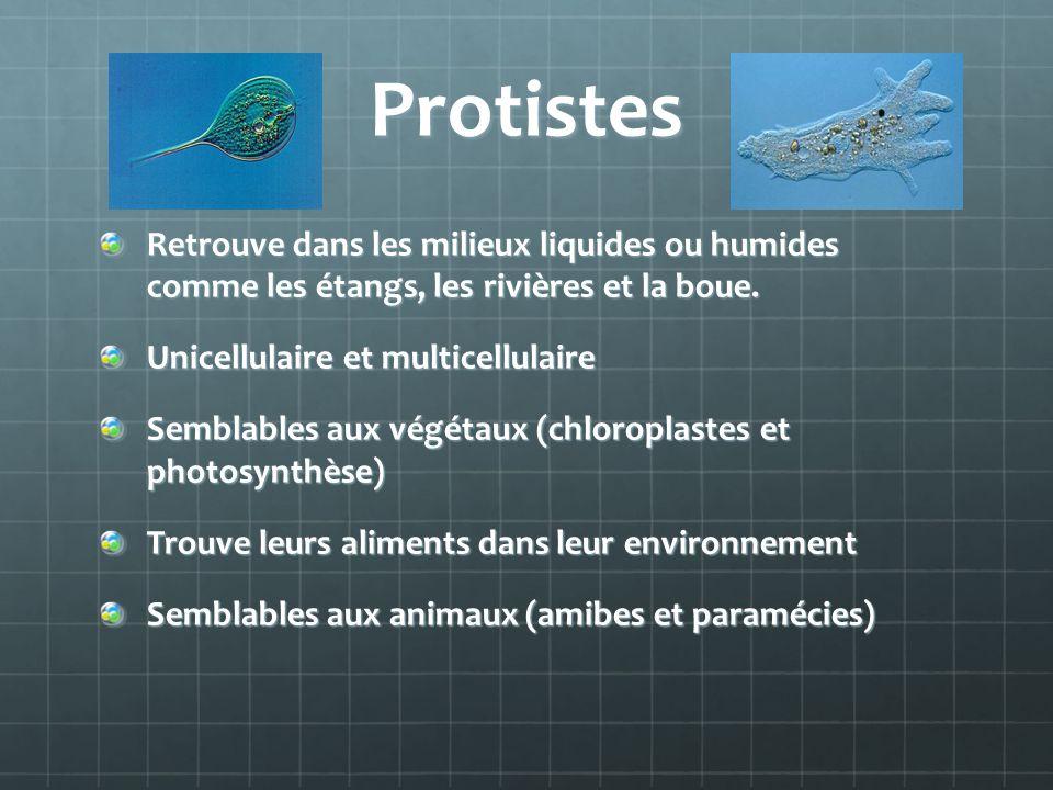 Protistes Retrouve dans les milieux liquides ou humides comme les étangs, les rivières et la boue. Unicellulaire et multicellulaire Semblables aux vég