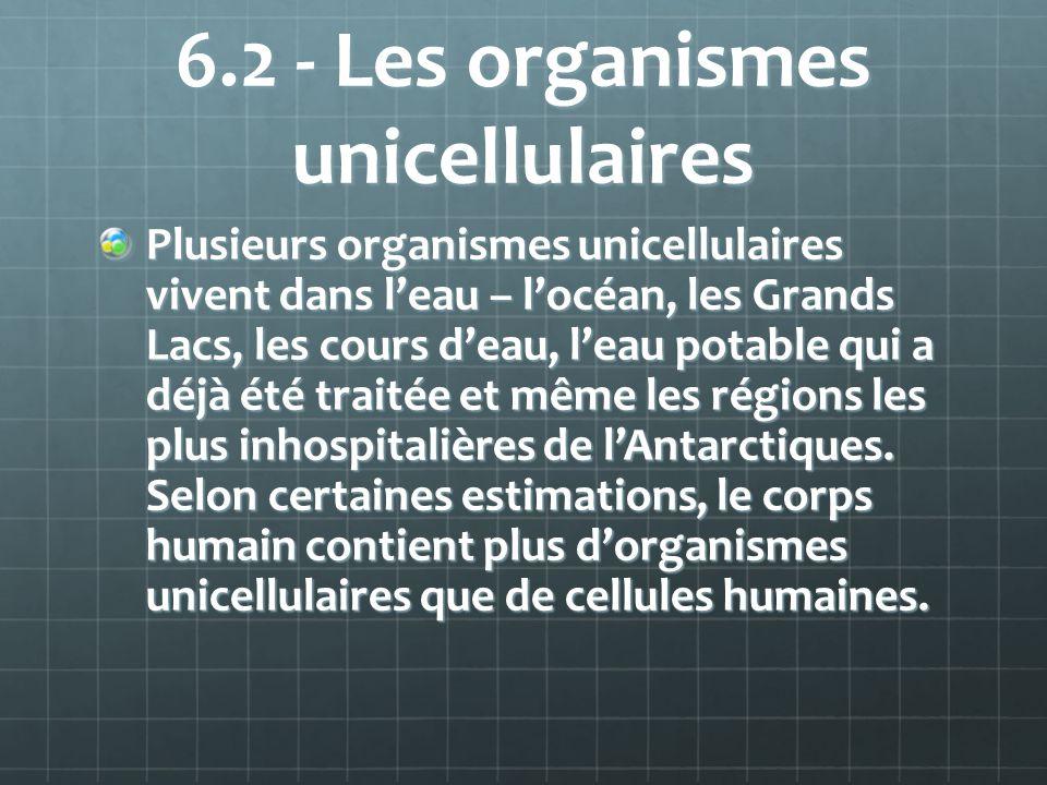 6.2 - Les organismes unicellulaires Plusieurs organismes unicellulaires vivent dans leau – locéan, les Grands Lacs, les cours deau, leau potable qui a