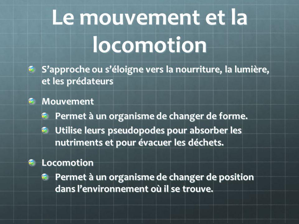 Le mouvement et la locomotion Sapproche ou séloigne vers la nourriture, la lumière, et les prédateurs Mouvement Permet à un organisme de changer de fo