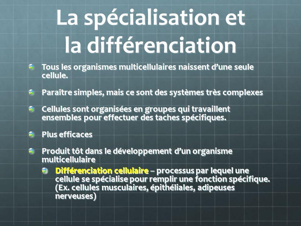 La spécialisation et la différenciation Tous les organismes multicellulaires naissent dune seule cellule. Paraître simples, mais ce sont des systèmes