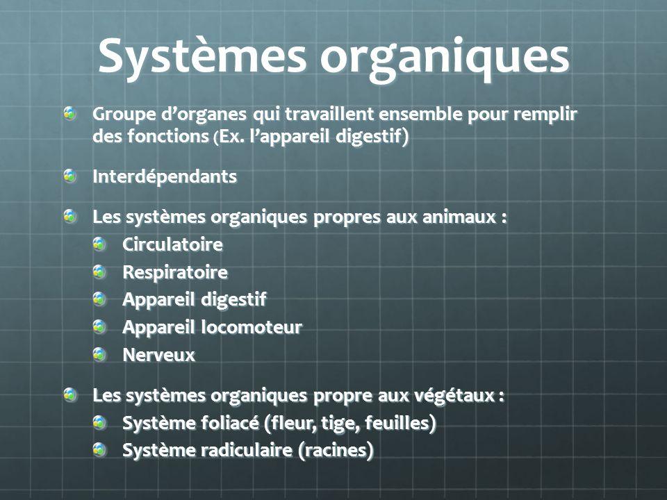 Systèmes organiques Groupe dorganes qui travaillent ensemble pour remplir des fonctions ( Ex. lappareil digestif) Interdépendants Les systèmes organiq