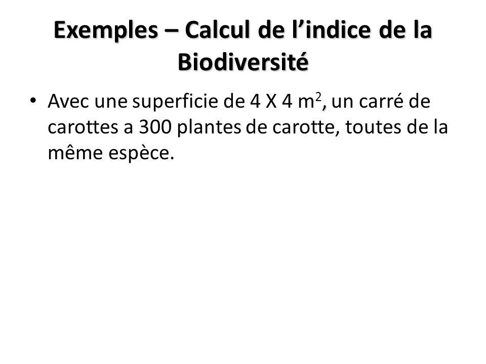 Exemples – Calcul de lindice de la Biodiversité, Avec une superficie de 4 X 4 m 2, un carré de carottes a 300 plantes de carotte, toutes de la même espèce.