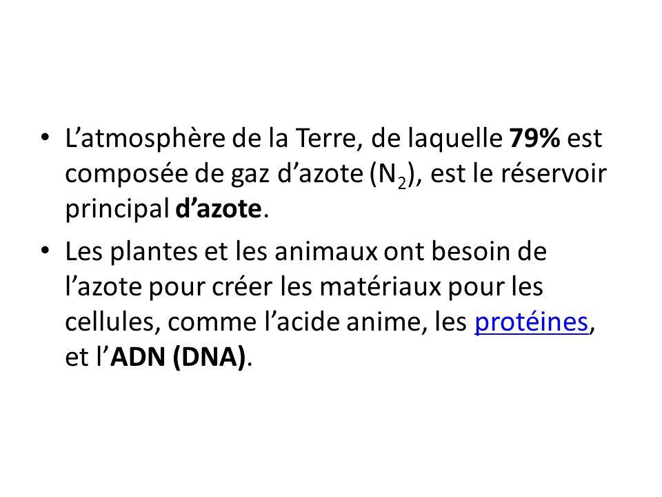 Latmosphère de la Terre, de laquelle 79% est composée de gaz dazote (N 2 ), est le réservoir principal dazote. Les plantes et les animaux ont besoin d