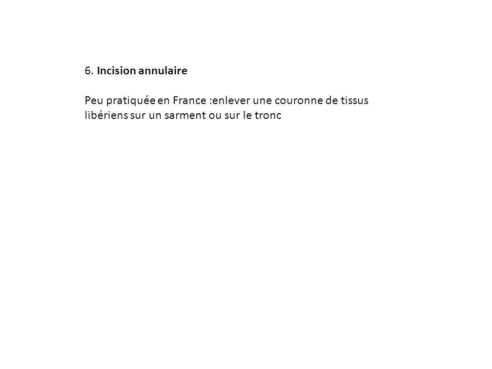 6. Incision annulaire Peu pratiquée en France :enlever une couronne de tissus libériens sur un sarment ou sur le tronc