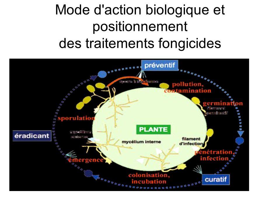 Mode d'action biologique et positionnement des traitements fongicides