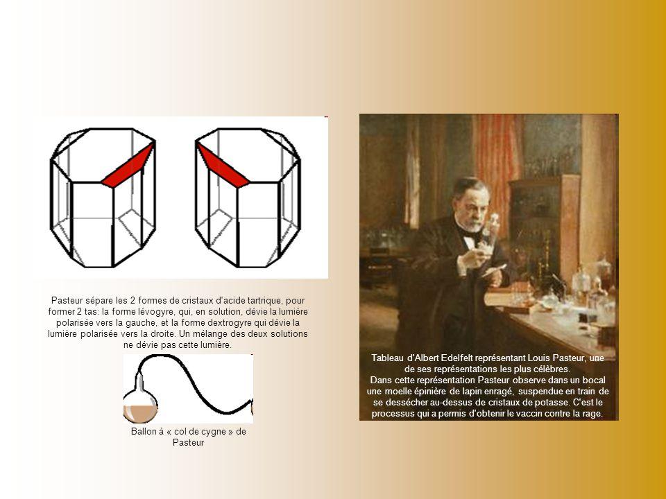 Pasteur sépare les 2 formes de cristaux d'acide tartrique, pour former 2 tas: la forme lévogyre, qui, en solution, dévie la lumière polarisée vers la
