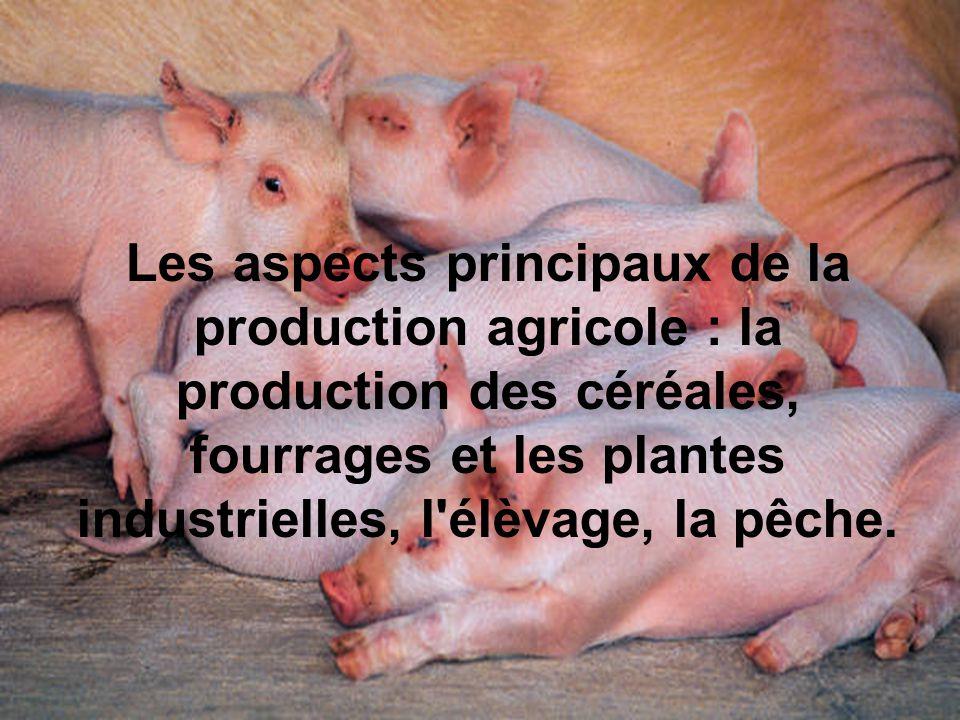 Les aspects principaux de la production agricole : la production des céréales, fourrages et les plantes industrielles, l'élèvage, la pêche.