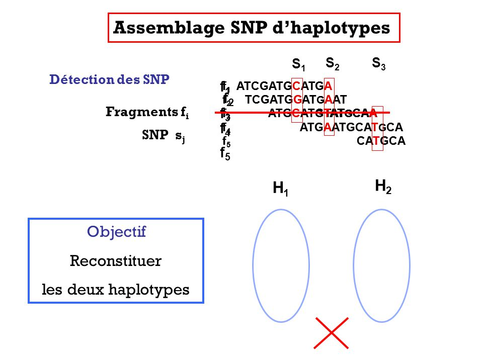 f 1 ATCGATGCATGA f 2 TCGATGGAT G AAT f 3 ATGCAT G TAT G CAA f 4 ATGAATGCAT G CA f 5 CATGCA Fragments f i f 1 ATCGATGCATGA f 2 TCGATGGAT G AAT f 3 ATGCATGTAT G CAA f 4 ATGAATGCAT G CA f 5 CATGCA Détection des SNP f 1 ATCGATGCATGA f 2 TCGATGGAT G AAT f 3 ATGCAT G TAT G CAA f 4 ATGAATGCAT G CA f 5 CATGCA SNP s j S1S1 S2S2 S3S3 Assemblage SNP dhaplotypes Objectif Reconstituer les deux haplotypes f1f1 f2f2 f5f5 f4f4 f3f3 H1H1 H2H2
