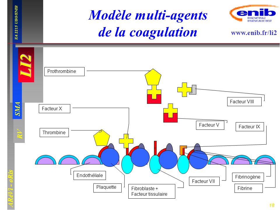 18 LI2 SMA EA 2215 UBO/ENIB ARéVi - oRis www.enib.fr/li2 RV F.W Endothéliale Plaquette Fibroblaste + Facteur tissulaire Facteur VII Fibrinogène Fibrin