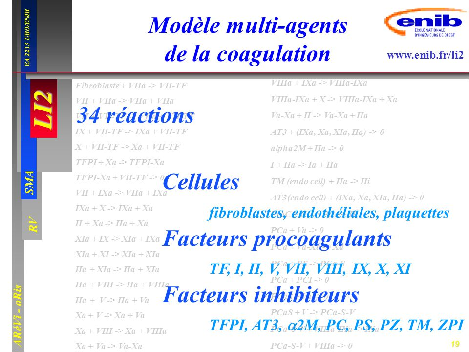 19 LI2 SMA EA 2215 UBO/ENIB ARéVi - oRis www.enib.fr/li2 RV Fibroblaste + VIIa -> VII-TF VII + VIIa -> VIIa + VIIa VII + VII-TF -> VIIa + VII-TF IX +