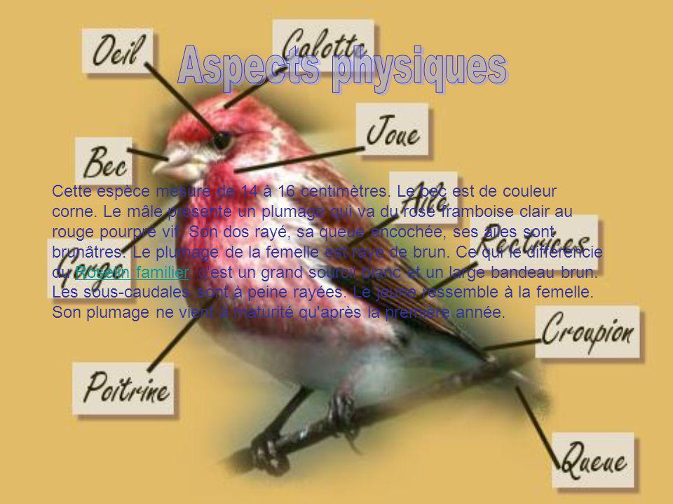 Introduction Le roselin pourpré est un oiseau que lon confond souvent avec le rouge-gorge. Non seulement, il nest pas en voie dextinction (heureusemen