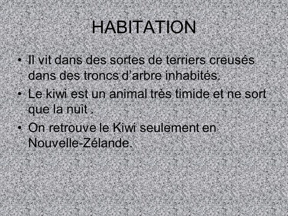 HABITATION Il vit dans des sortes de terriers creusés dans des troncs darbre inhabités.