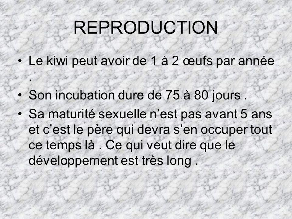 REPRODUCTION Le kiwi peut avoir de 1 à 2 œufs par année.