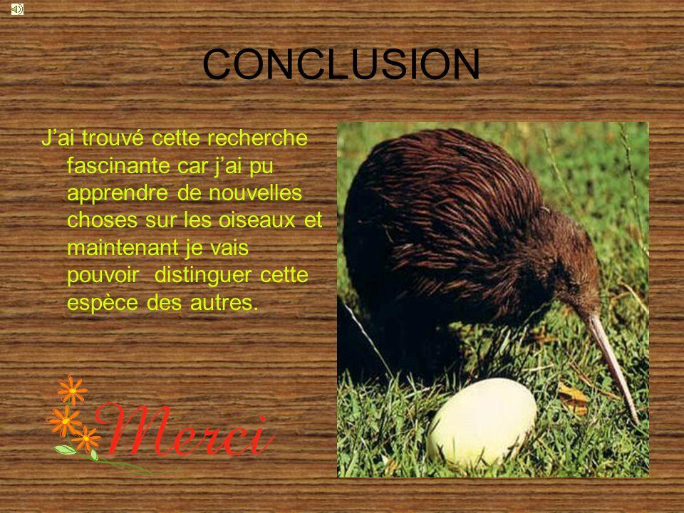 CONCLUSION Jai trouvé cette recherche fascinante car jai pu apprendre de nouvelles choses sur les oiseaux et maintenant je vais pouvoir distinguer cette espèce des autres.