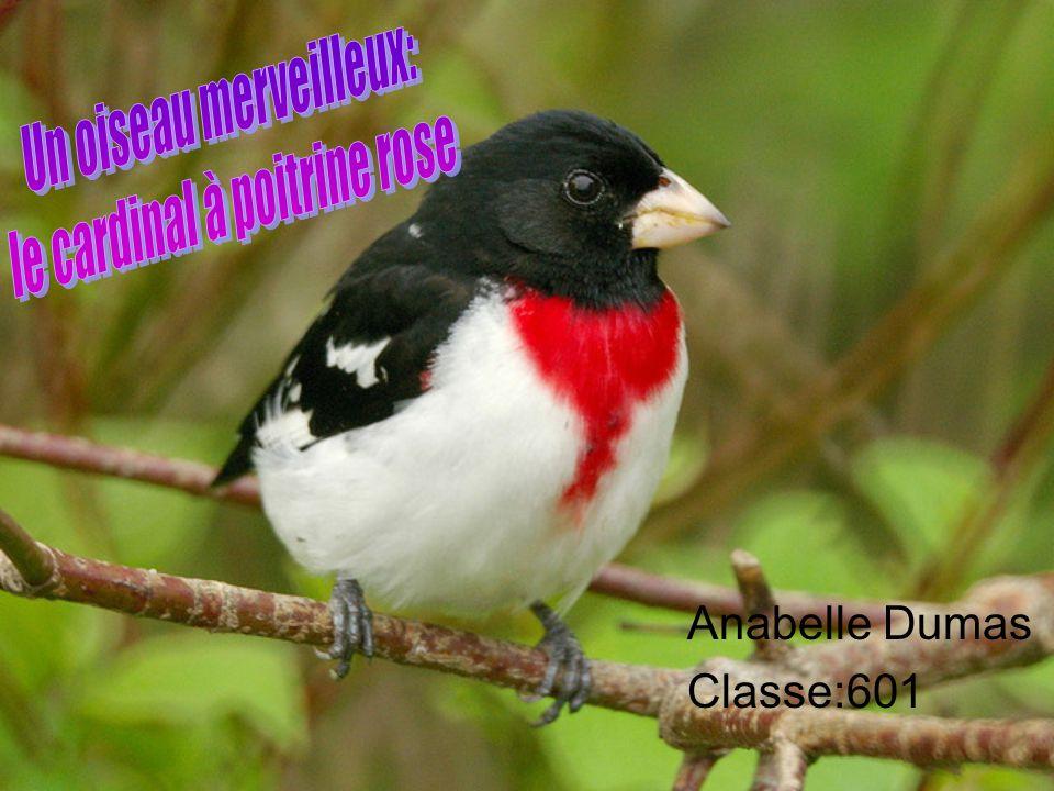 Anabelle Dumas Classe:601