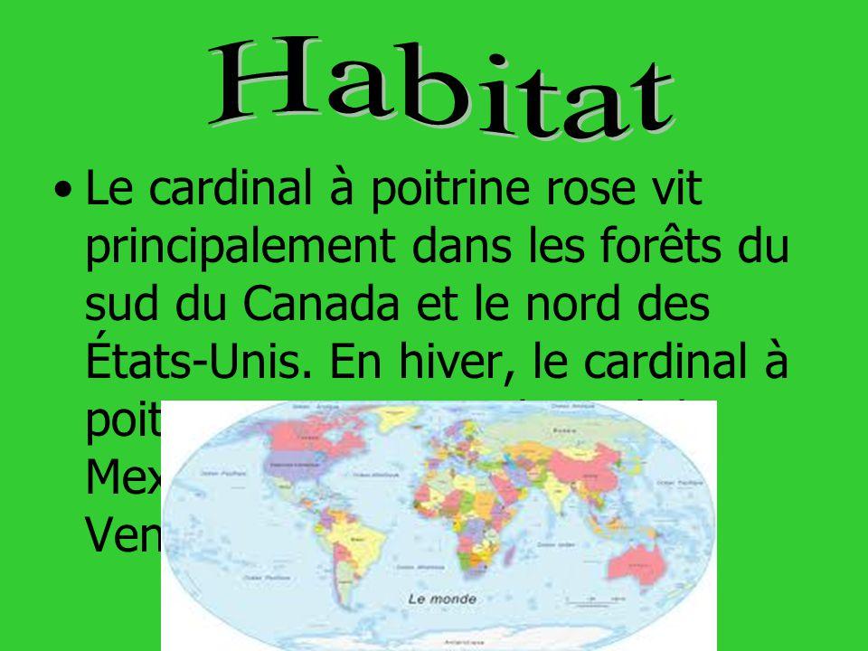 Le cardinal à poitrine rose vit principalement dans les forêts du sud du Canada et le nord des États-Unis. En hiver, le cardinal à poitrine rose migre