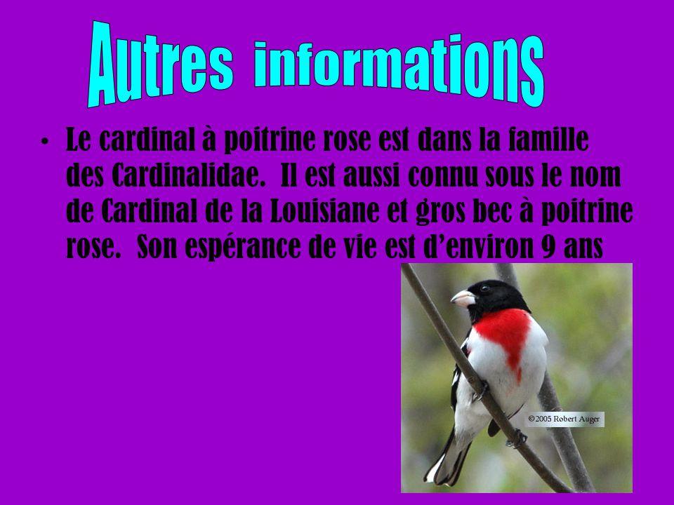 Le cardinal à poitrine rose est dans la famille des Cardinalidae. Il est aussi connu sous le nom de Cardinal de la Louisiane et gros bec à poitrine ro
