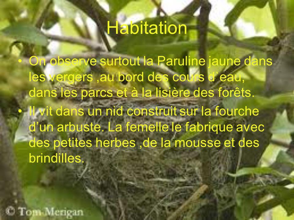 Habitation On observe surtout la Paruline jaune dans les vergers,au bord des cours d`eau, dans les parcs et à la lisière des forêts. Il vit dans un ni