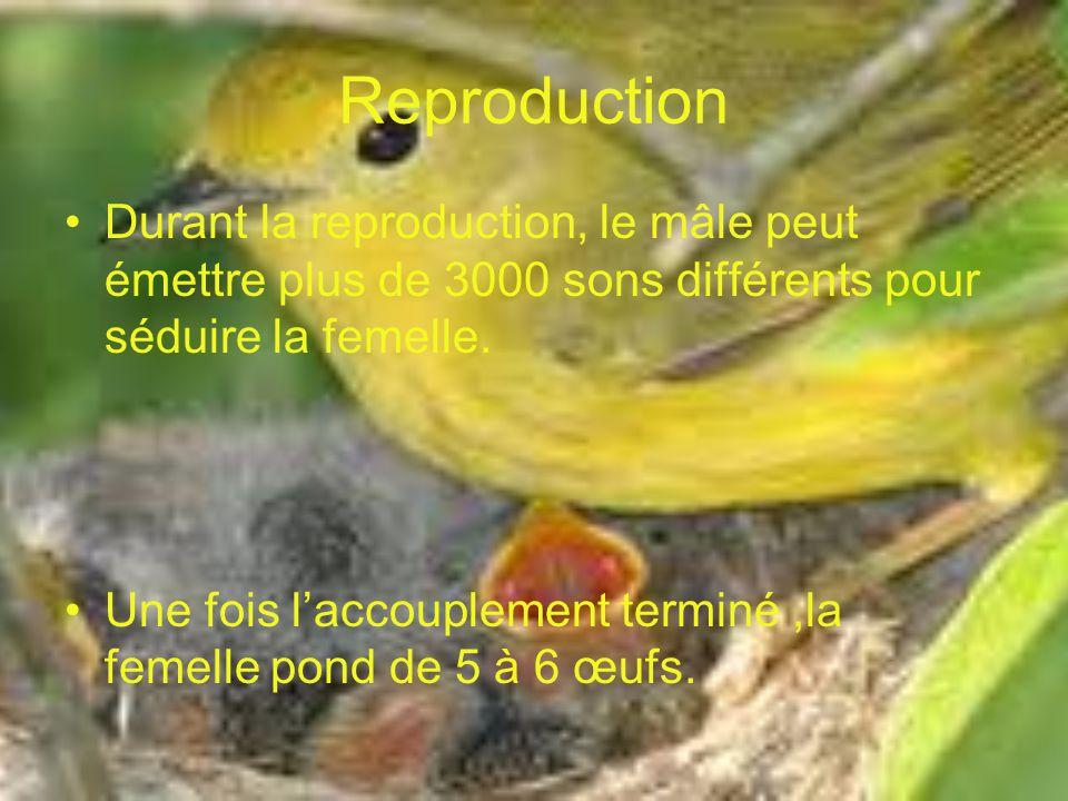 Reproduction Durant la reproduction, le mâle peut émettre plus de 3000 sons différents pour séduire la femelle. Une fois laccouplement terminé,la feme