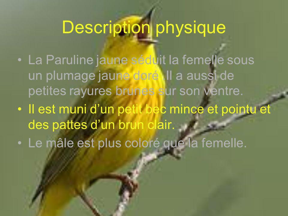 Description physique La Paruline jaune séduit la femelle sous un plumage jaune doré.Il a aussi de petites rayures brunes sur son ventre. Il est muni d