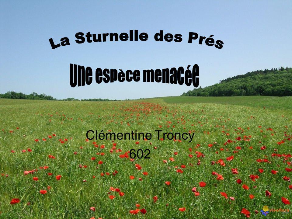 Clémentine Troncy 602